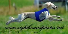 Lure Coursing Hur Går De Till På Tävling
